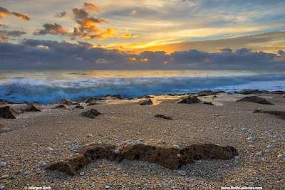 Singer Island Ocean Reef Park Sunrise photos