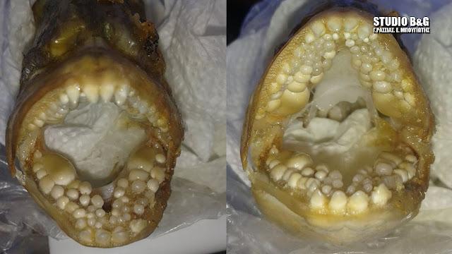 Ψάρι με ανθρώπινα δόντια έπιασε ψαράς από την Αργολίδα