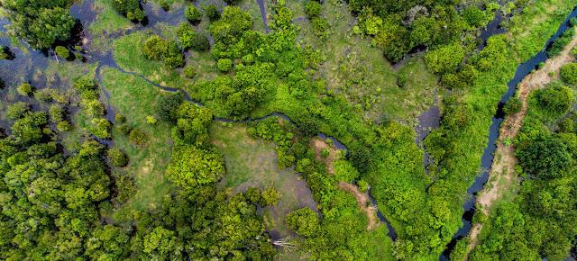 Los bosques de turberas, un tipo de humedal, como éste en Kalimantan central, Indonesia, pueden almacenar gases nocivos de dióxido de carbono.CIFOR/Nanang Sujana