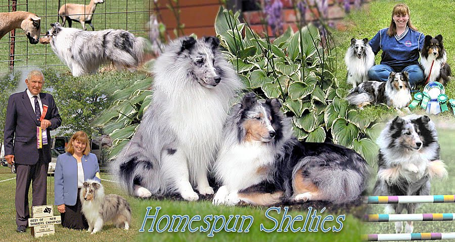 Homespun Shelties
