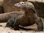 Museum Komodo dan Taman Reptilia