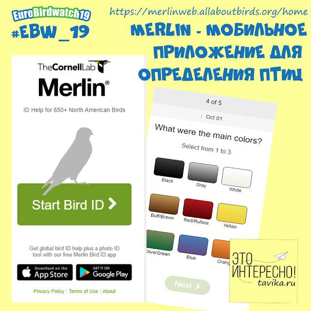 мобильный определитель птиц