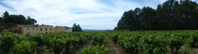 Vista general d'un camp de vinyes