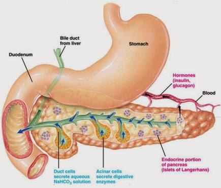 Image Penyebab Dan Alasan Penyakit Diabetes