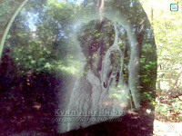 Кладовище тварин кладбище домашних животных