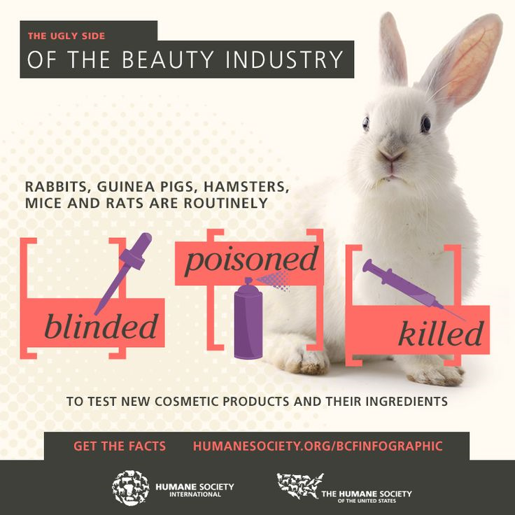 animal testing of products should be banned Home what we do  keep you informed  science corner  animals used in testing the use of animals in product testing toxicity tests to estimate the safety of products and chemicals were developed in the early 20th century.