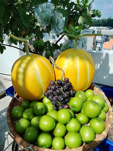 Rỗ trái cây sau mỗi lần thu hoạch đủ chủng loại