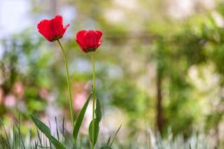 Wizualizacja kwiatów