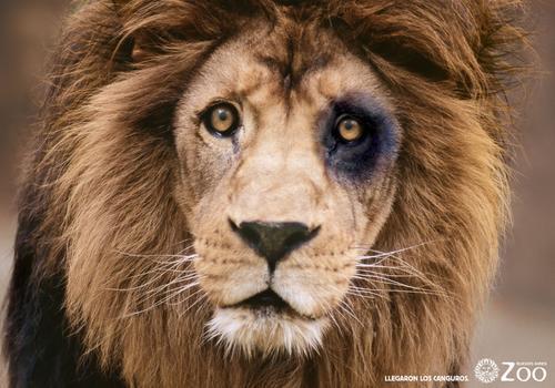 Sporting leão sá pinto liedson