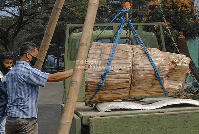 jual batu fosil kayu termahal ukuran besar