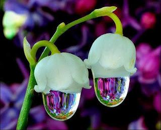 farklı çiçek türleri