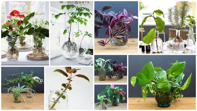 Καλλιέργεια Φυτών Εσωτερικού Χώρου σε Νερό