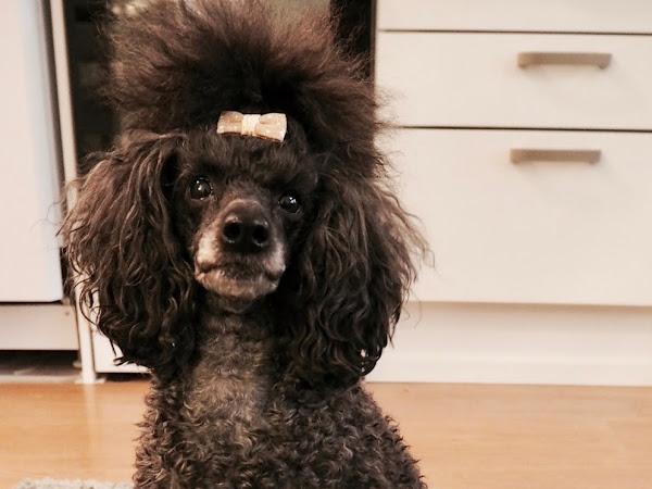 Syntymäpäiväkakku koiralle