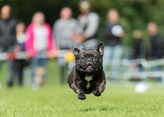 exercício para cães atletas