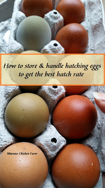 storing eggs, hatching
