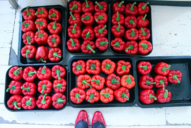red peppers, red shoes,  msmarmitelover's Frida Kahlo supperclub