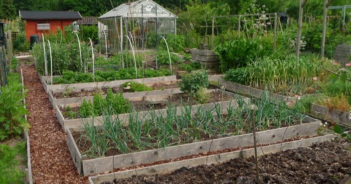 huis-tuin-en-keuken: C: Wat is homesteading?