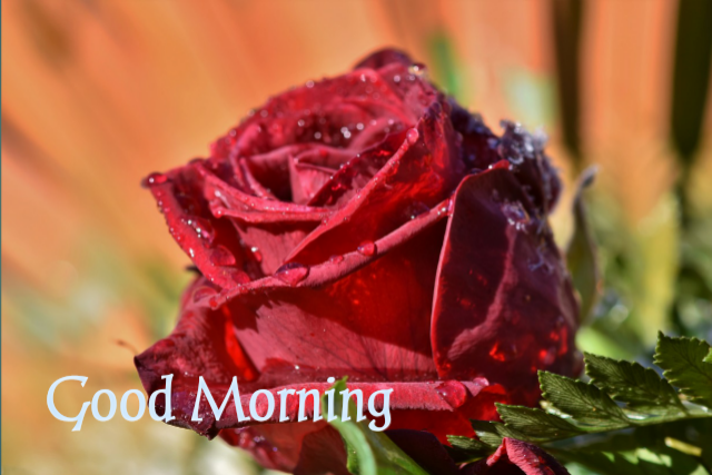 Good morning gif free download