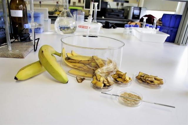 Cascas de banana limpam águas com metais pesados
