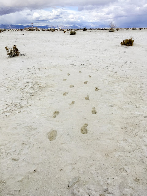 Fossil footprints tell story of prehistoric parent's journey