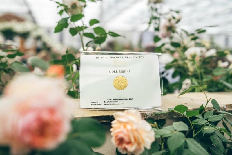 Medalla de Oro a la mejor rosa