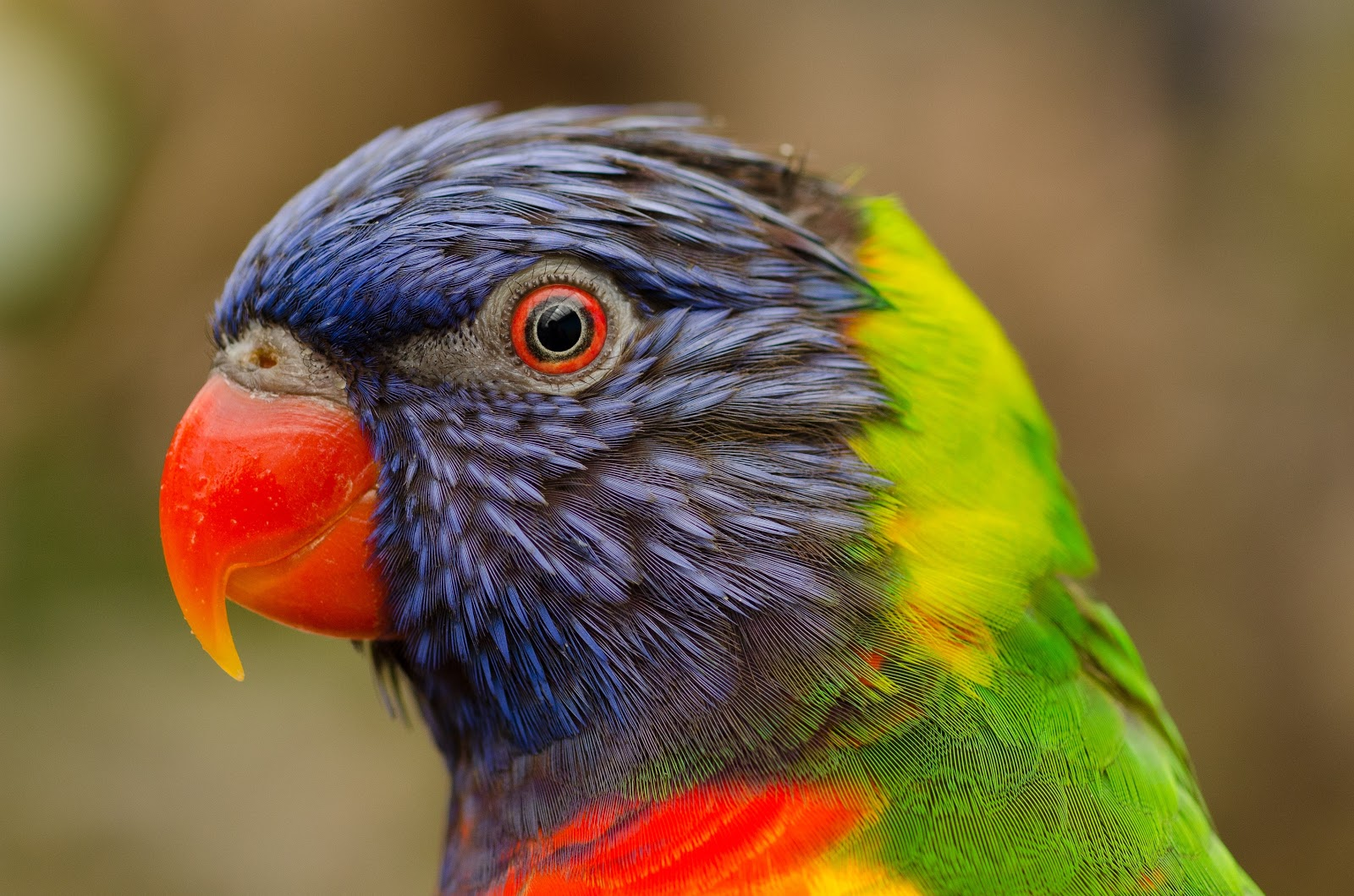 bird-flying-zoo-beak-pictures