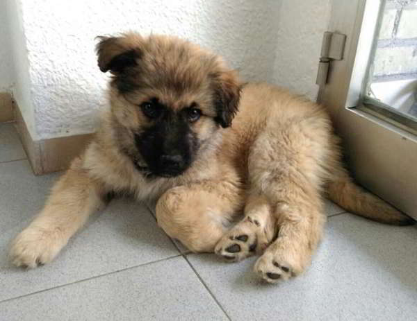cachorro talla grande