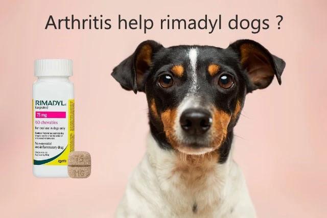 arthritis medicine for dogs rimaille rimadyl for arthritis in dogs rimadyl dog arthritis arthritis medication for dogs rimadyl rimadyl for dog arthritis carprofen dogs arthritis rimadyl and arthritis in dogs rimadyl dog arthritis rimadyl for dog arthritis rimadyl for arthritis in dogs rimadyl for dogs arthritis dog arthritis rimadyl can you give dogs rimadyl for arthritis rimadyl dog pain rimadyl for dogs with arthritis rimadyl for pain in dogs rimadyl dogs dosage rimadyl dogs overdose rimadyl dogs sleepy rimadyl dogs cost rimadyl dogs reddit rimadyl dogs incontinence rimadyl dogs pancreatitis rimadyl dogs 100mg rimadyl dogs side effects rimadyl dogs after surgery rimadyl dog ate bottle rimadyl dog aggression rimadyl anxiety dogs carprofen dogs arthritis carprofen dogs amazon dog rimadyl alternative dog rimadyl and tramadol rimadyl for dogs buy online rimadyl for dogs bloody diarrhea rimadyl for dogs blood in urine rimadyl for dogs best price rimadyl for dogs buy rimadyl for dog back pain rimadyl for dog bite rimadyl dogs constipation rimadyl dogs cancer carprofen dogs constipation carprofen dogs chewable carprofen dogs costco rimadyl for dogs canada rimadyl dosage dogs chart canine rimadyl dose rimadyl dogs diarrhea rimadyl dog dose chart rimadyl dog death rimadyl dose dogs nz rimadyl diabetes dogs carprofen dogs dosage carprofen dogs diarrhea dosage rimadyl dogs rimadyl dog ear infection rimadyl for dogs expiration rimadyl for dogs empty stomach rimadyl for dogs eye ulcer rimadyl for dogs ebay rimadyl for dogs entirelypets rimadyl side effects dogs overdose rimadyl dog food rimadyl for dogs dosage rimadyl for dogs amazon rimadyl for dogs uk rimadyl for dogs 75 mg rimadyl for dogs overdose rimadyl for dogs dosage chart rimadyl dog gas rimadyl for dogs carprofen dogs generic rimadyl for dogs give with food rimadyl for dogs good or bad carprofen for dogs does rimadyl give dogs gas does rimadyl for dogs go bad rimadyl dogs how long rimadyl dog how much rimadyl hurt do