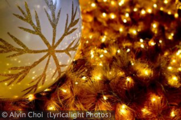 Alvin Choi (Lyricalight Photos) Christmas