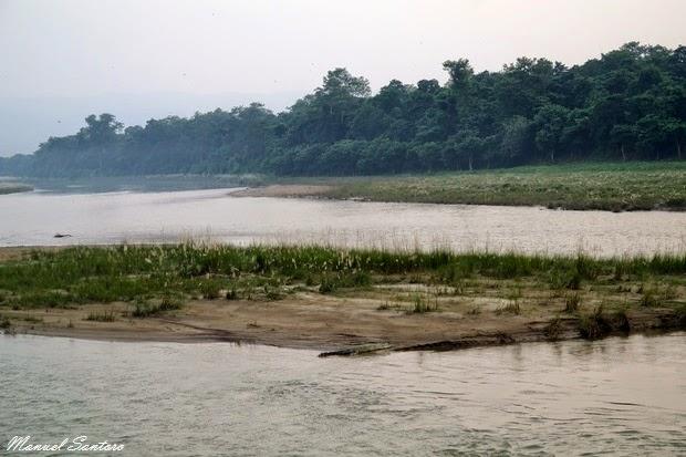 Sauraha, coccodrillo sul fiume Rapti