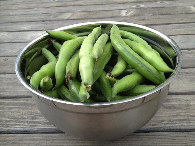 8 Manfaat Kacang Fava Yang Menakjubkan dan Bergizi