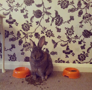 house rabbit, bunny, pet loss, memories, nicki kinickie, lbloggers, lifestyle blog, dealing with loss of pet,