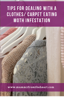 moth infestation pin