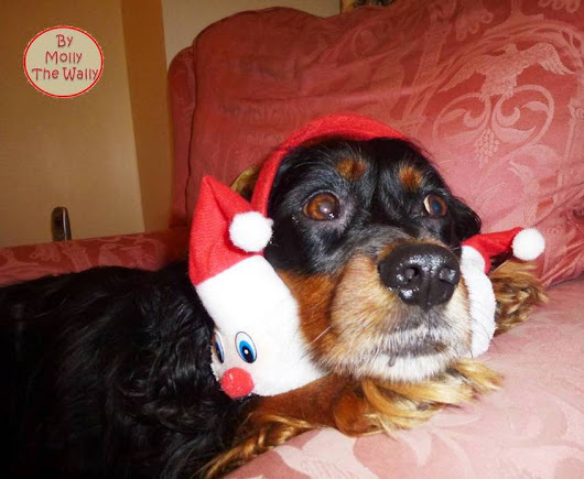 Molly The Wally. The Little Dog With A Blog!: Merry Christmas To You All!