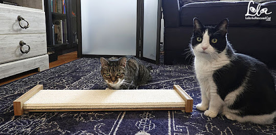Tabby Cat and Black and White Cat with Bootsie's Combination Scratcher
