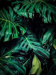Foto oleh Aditya Aiyar dari Pexels
