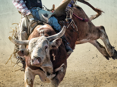 Days Of 47 Rodeo Images Wallpapers