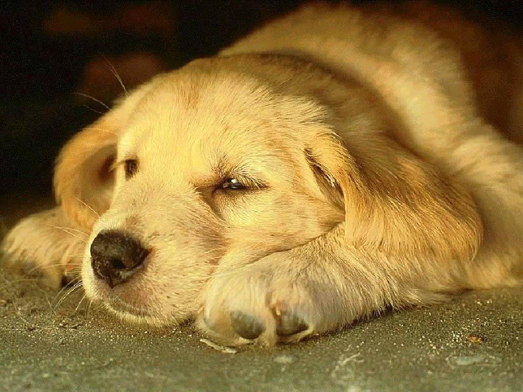 Free Desktop Wallpapers | Backgrounds: Dog Wallpapers for Desktop Background