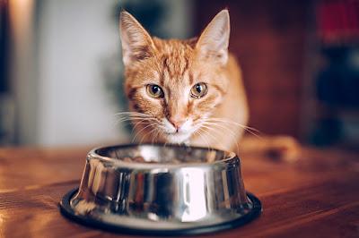 tempat makan kucing