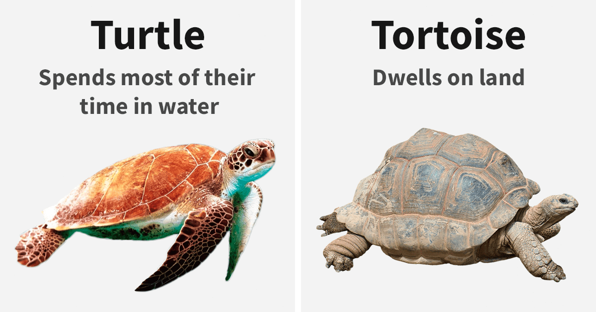 The Differences Between Similar Things, Animals, And Words That Most People Believe To Be Exactly The Same