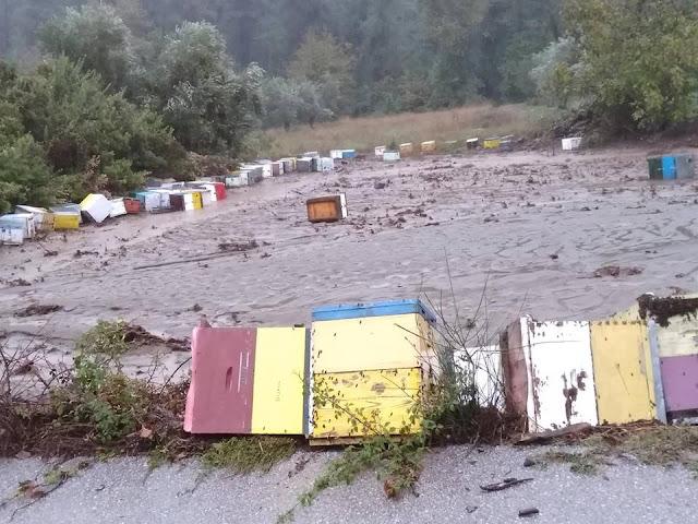 Κόλαση του Δάντη στην Εύβοια: Εκατόμβη νεκρών μελισσιών