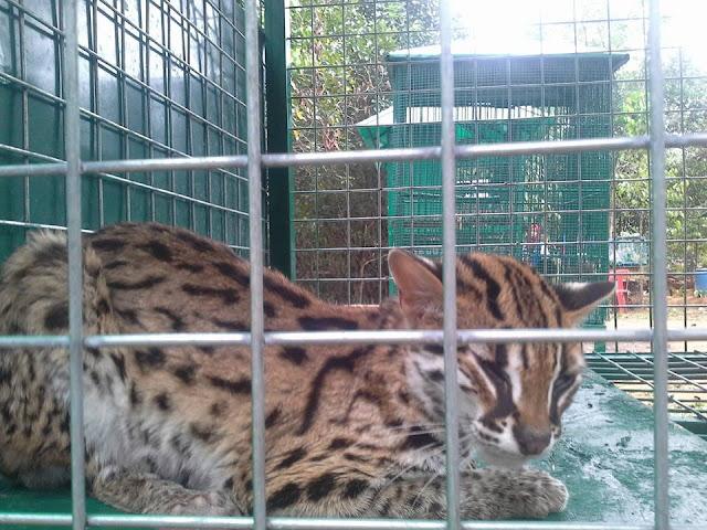 mini zoo punggowo batam