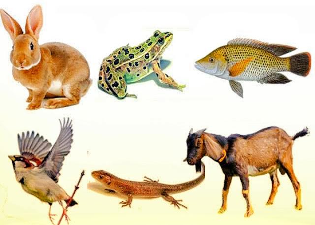 Klasifikasi Hewan Vertebrata Dan Invertebrata Beserta Penjelasannya