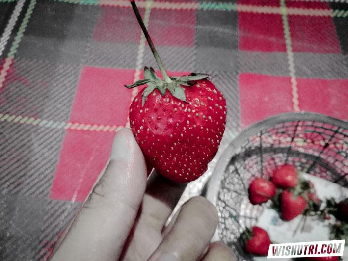 Stroberi Cemoro Kandang Tawangmangu