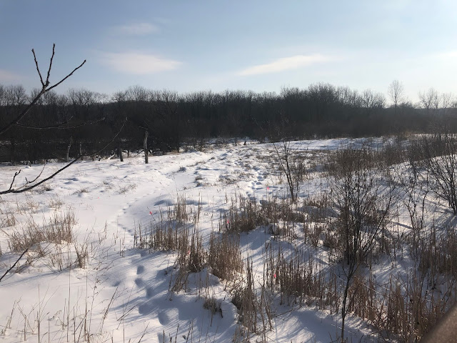 Exploring Hidden Lake Forest Preserve in Downers Grove, Illinois