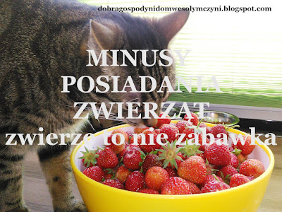 https://dobragospodynidomwesolymczyni.blogspot.com/2016/12/minusy-posiadania-zwierzat-zwierze-to.html