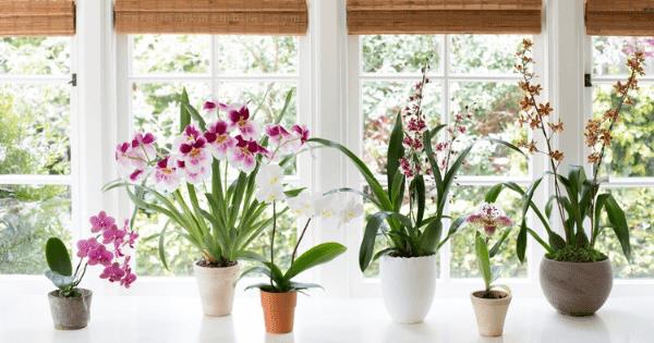 13 Jenis Tanaman Hias Dalam Ruangan (Indoor)