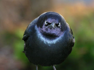 Fotos de los Angry birds en la vida real.