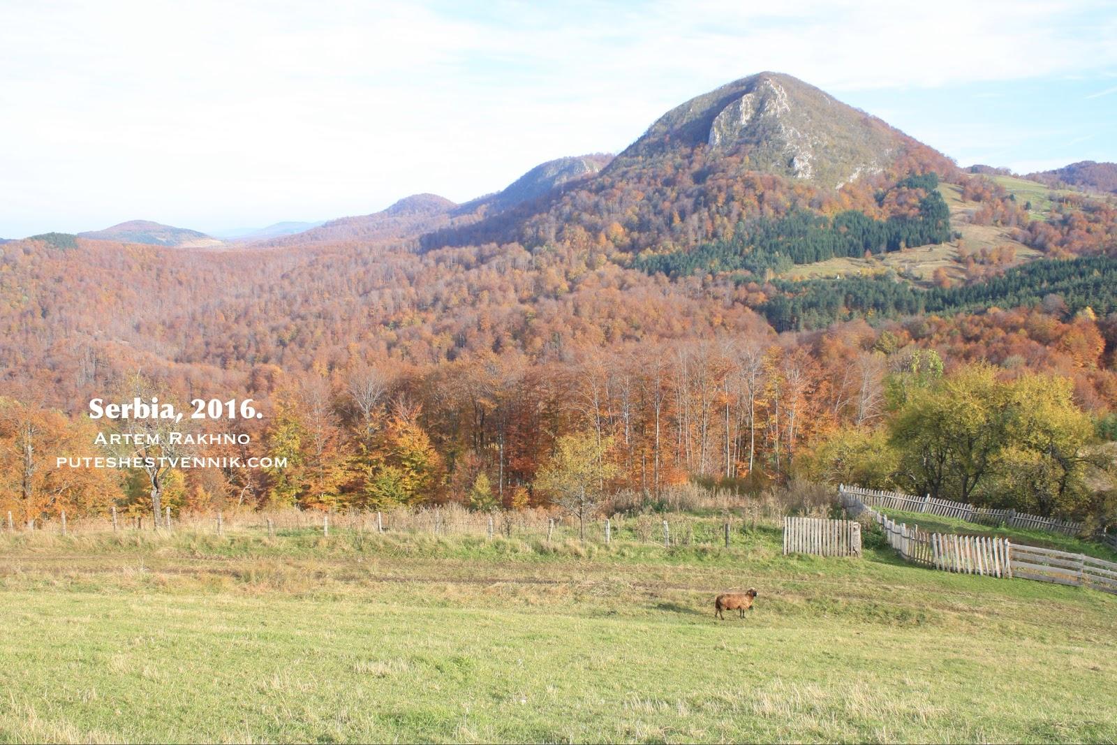 Осенний лес и горы в Сербии