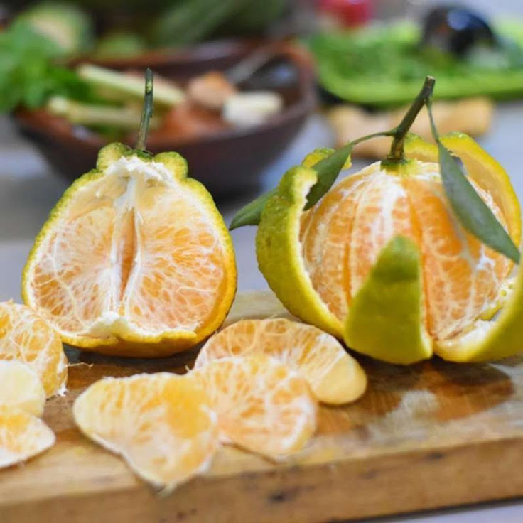 bibit buah super murah Kendari